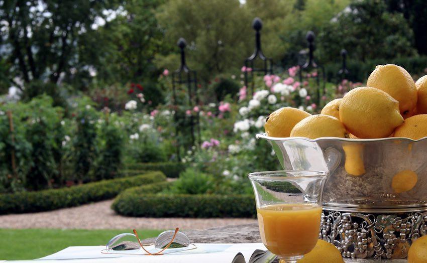 Rankhilfen für Rosen mit Zitronen und Orangensaft im Garten
