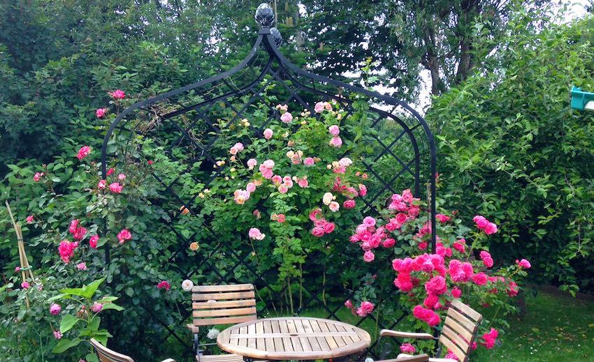 Rosenlaube mit Rosa und roten Rosen und Holztisch
