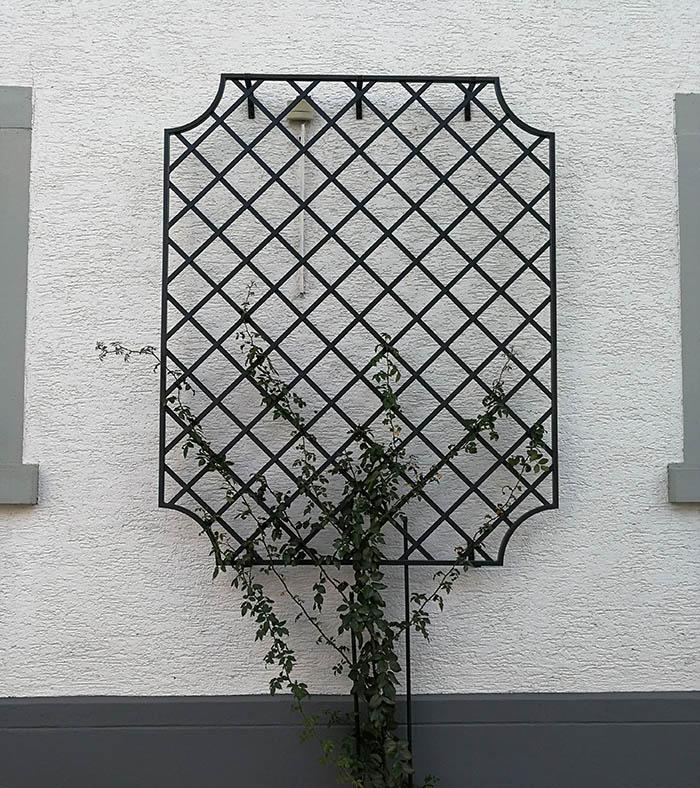 Wand Rankgitter Wollaton mit neu gepflanzter Kletterrose