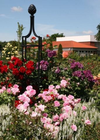 Freistehende Rankhilfe für Rosen aus Metall in Schwarz