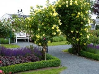 Zwei Rosenbögen mit gelben Rosen aus Metall