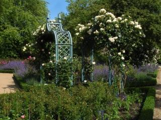 Grüner Rosenbogen aus Metall
