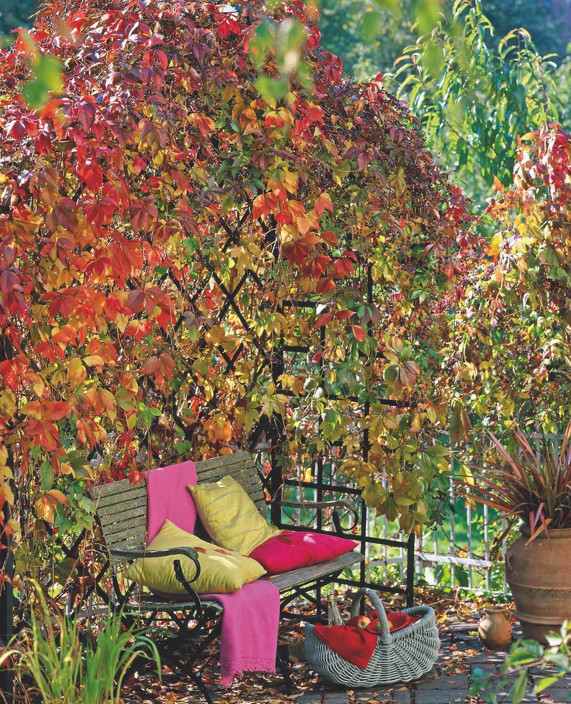 Viktorianische-Rosenlaube Laube mit Parthenocissus quinquefolia