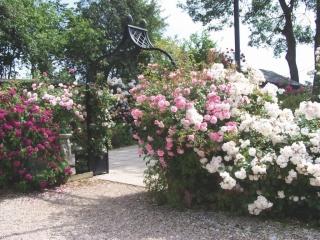 Massiver schwarzer Rosenbogen Eingang zum Garten
