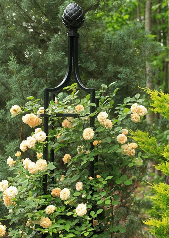 Rankgitter Schwarz Metall mit gelben Rosen
