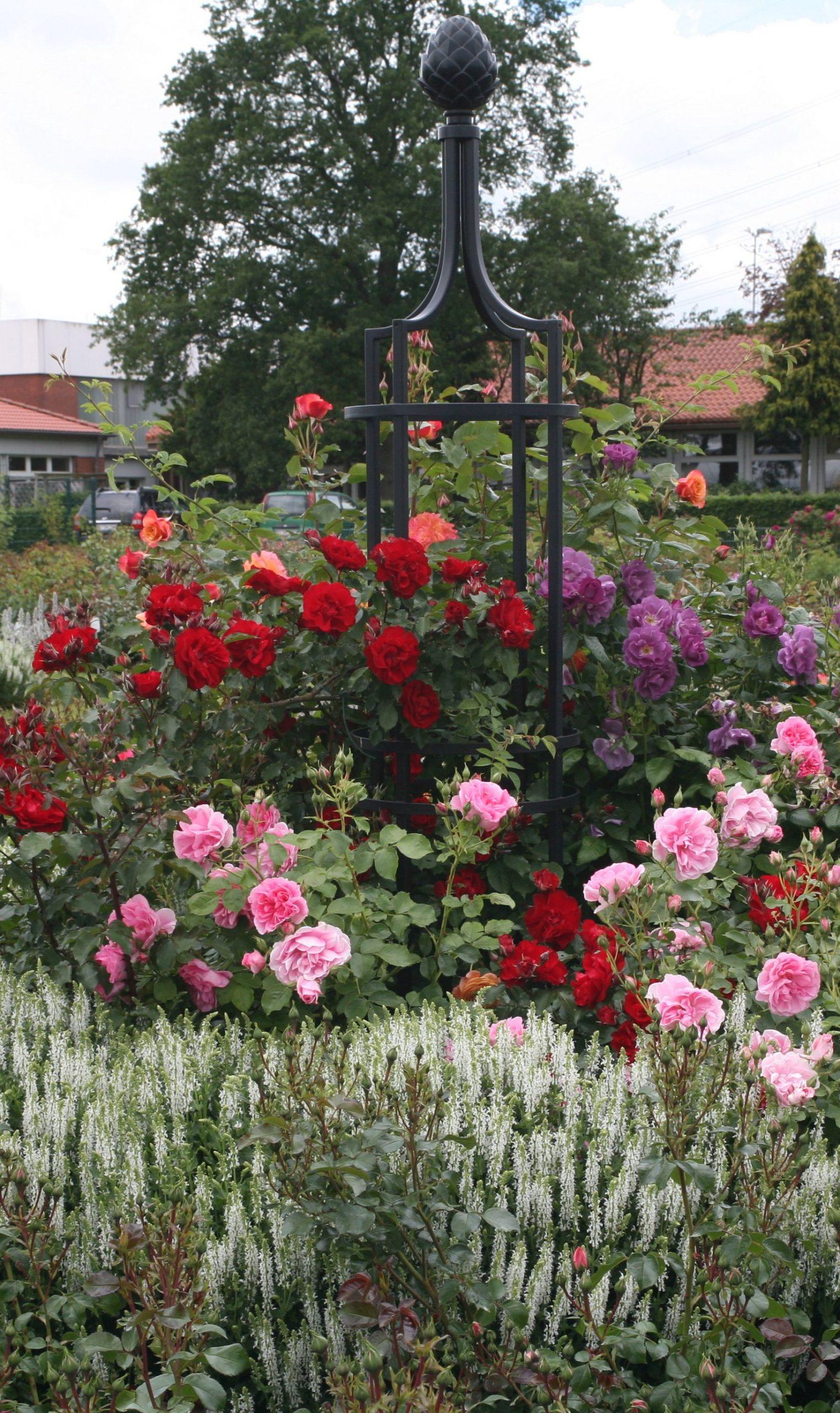 Rankgitter schwarz mit vielen farbigen Rosen aus Metall