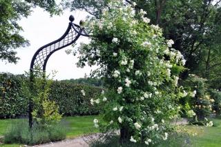 Rosenbogen Brighton aus Metall einseitig gepflanzt