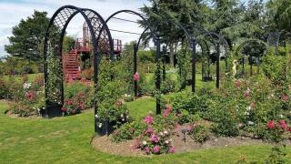 Sieben Romantische Rosenbögen hintereinander in Parkanlage vom Hersteller kaufen