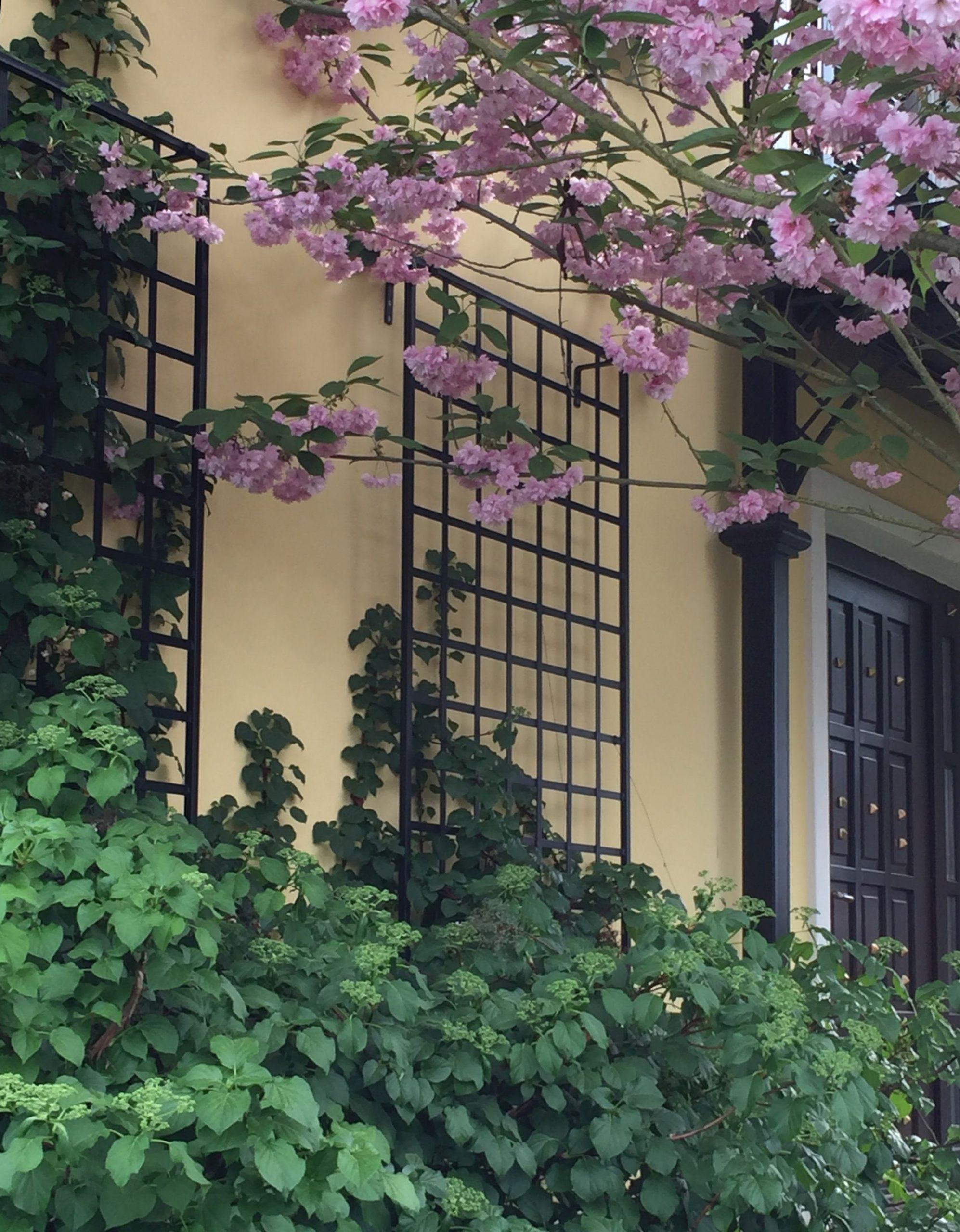 Zwei Rankgitter für Rosen aus Metall in Schwarz an gelber Wand