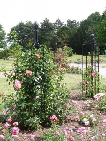 Zwei Rankobelisk, Rankhilfen in Schwarz. Rosa Rosen freistehend
