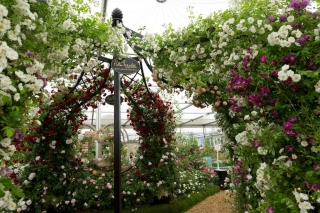 Chelsea-Flower-Show-Keith-Mindham