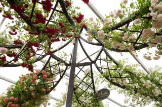 Chelsea Flower Show Rosenpavillon Classic Garden