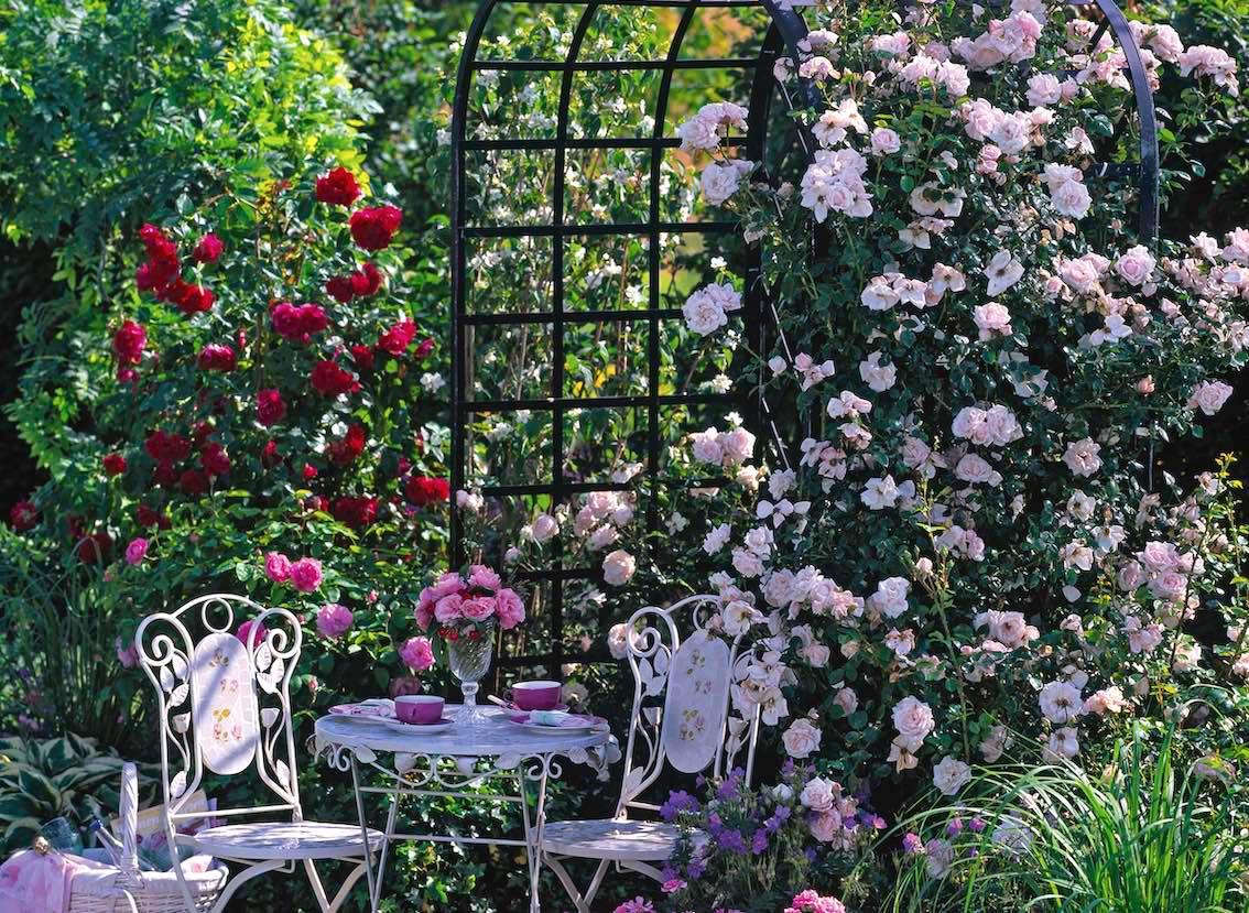 Englische Rosenlaube mit Tisch im Garten bewachsen mit zwei Rosenarten