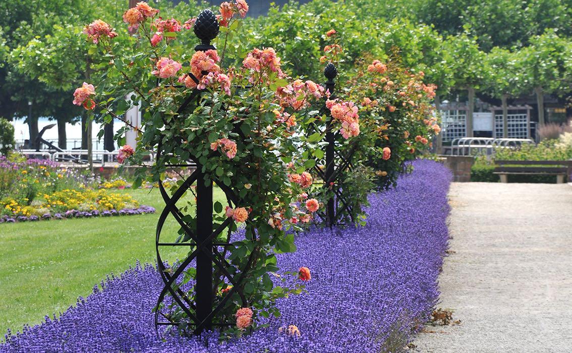 Klettergerüst Rosen Selber Bauen : Wahl der passenden rankhilfe tipps und tricks rund um rosen