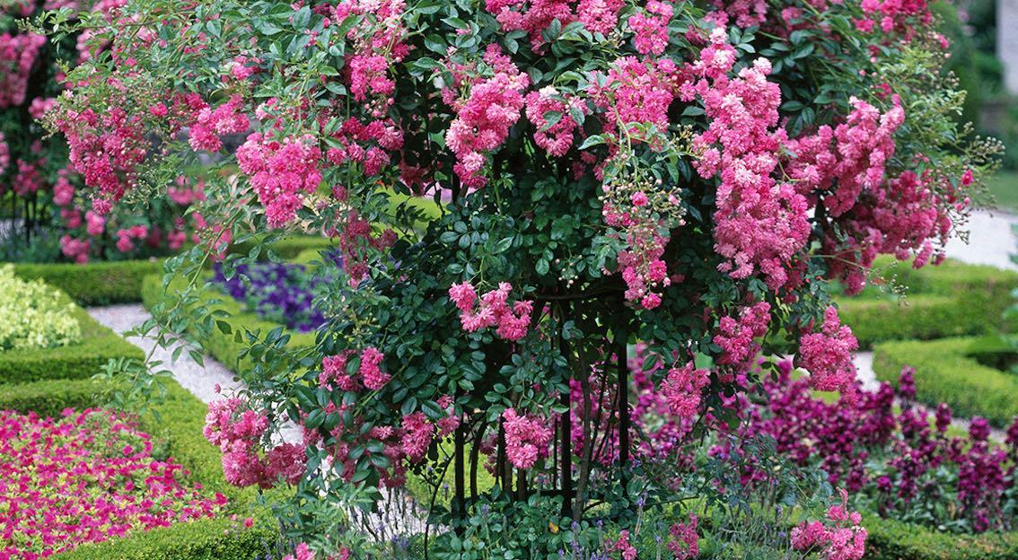 Pflanzenstützen aus Metall für Rosen und Kletterpflanzen