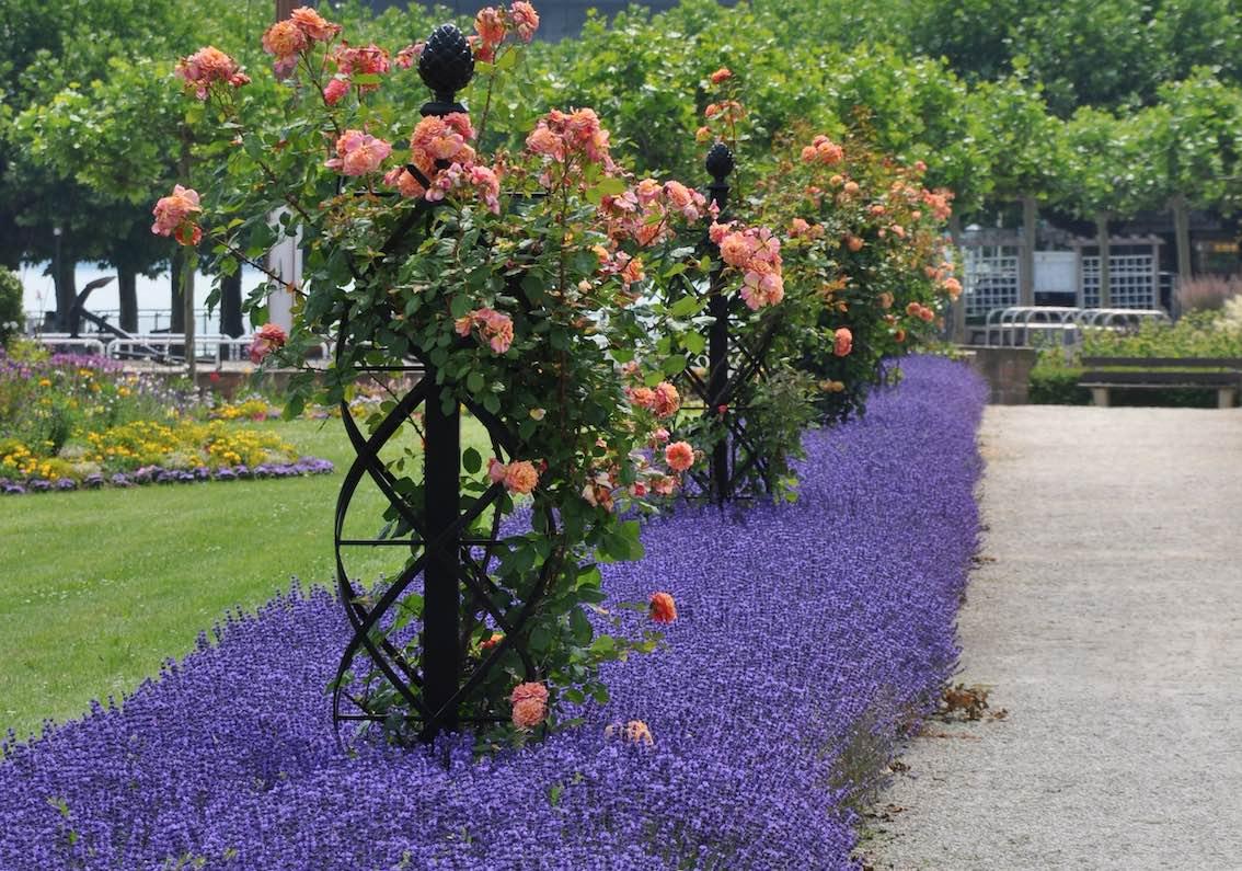 Rosen Rankobelisk aus Metall im Park