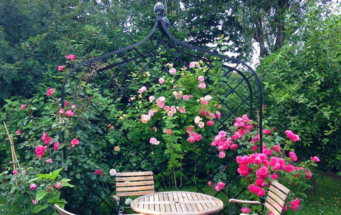 wahl der passenden rankhilfe ~ tipps und tricks rund um rosen