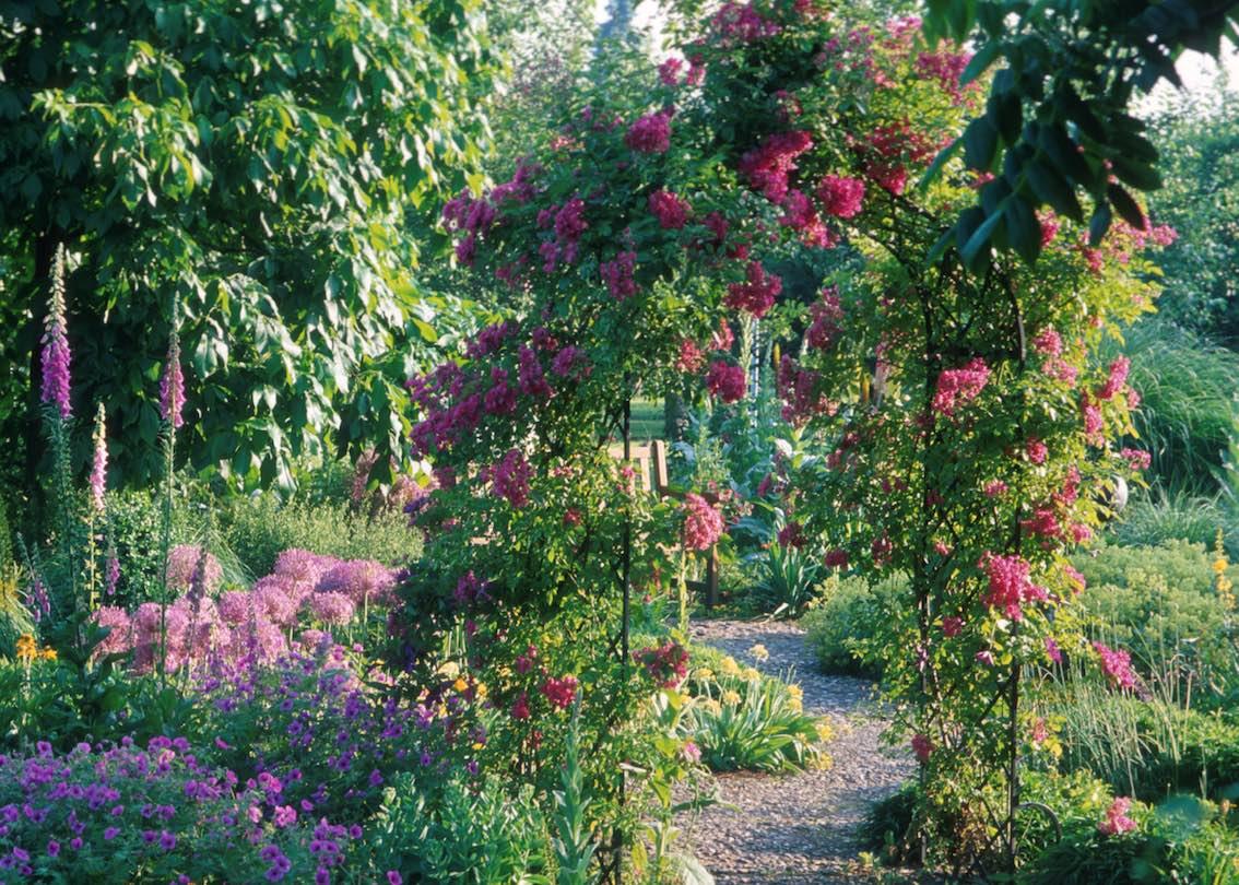 Viktorianischer Rosenbogen aus Metall bewachsen mit Rosa Blumen