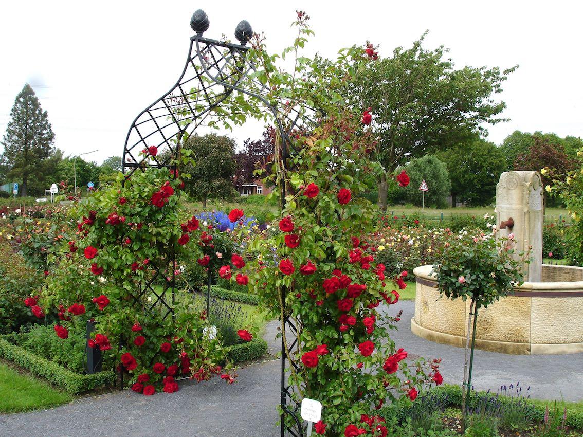 Viktorianischer Rosenbogen aus Metall mit roten Rosen bewachsen im Park
