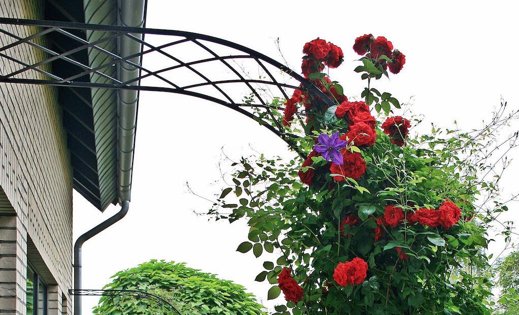 Halbrunder Metall Rosenbogen mit roten Rosen