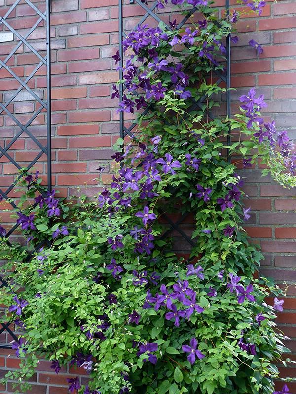 Klassisches Wandgitter mit violetten Blumen - polnischer Geist