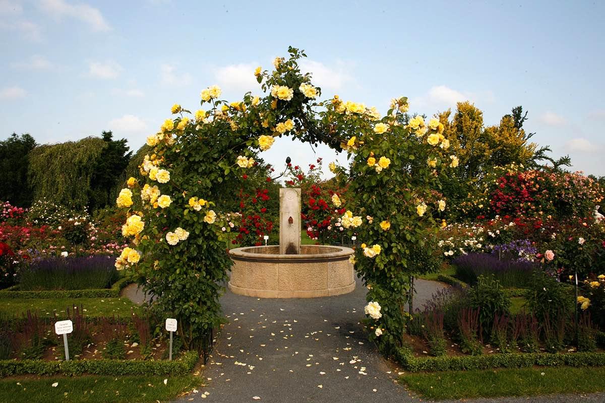 Metall Rosenbogen Schwarz Breit Hoch bewachsen mit gelben Rosen