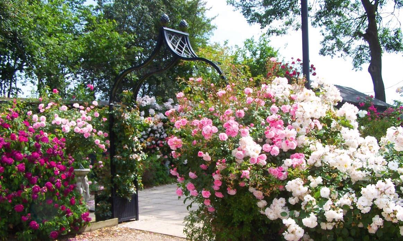 Metall Rosenbogen mit vielen Rosenarten und Farben