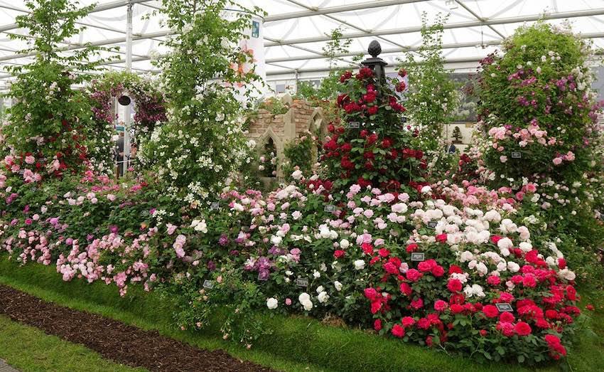 Metall Rosenpyramide Schwarz Chelsea Flower Show