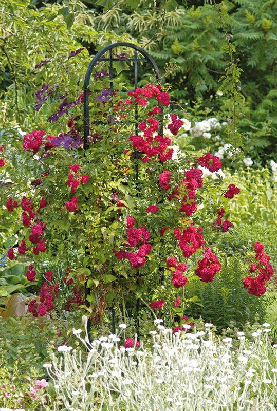 Metall-rankgitter Burlington Schwarz mit roten Rosen freistehend