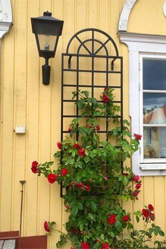 Orangen Spalier für Rosen aus Metall 185 x 70