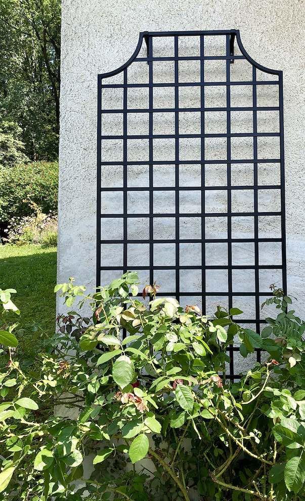 Rankgitter-Wollaton-aus-Metall-im-Mass-100-x-200-cm-an-Hauswand 1