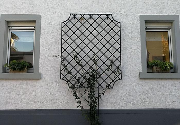 Rankgitter-aus-Metall-Wollaton-zwischen-zwei-Fenstern