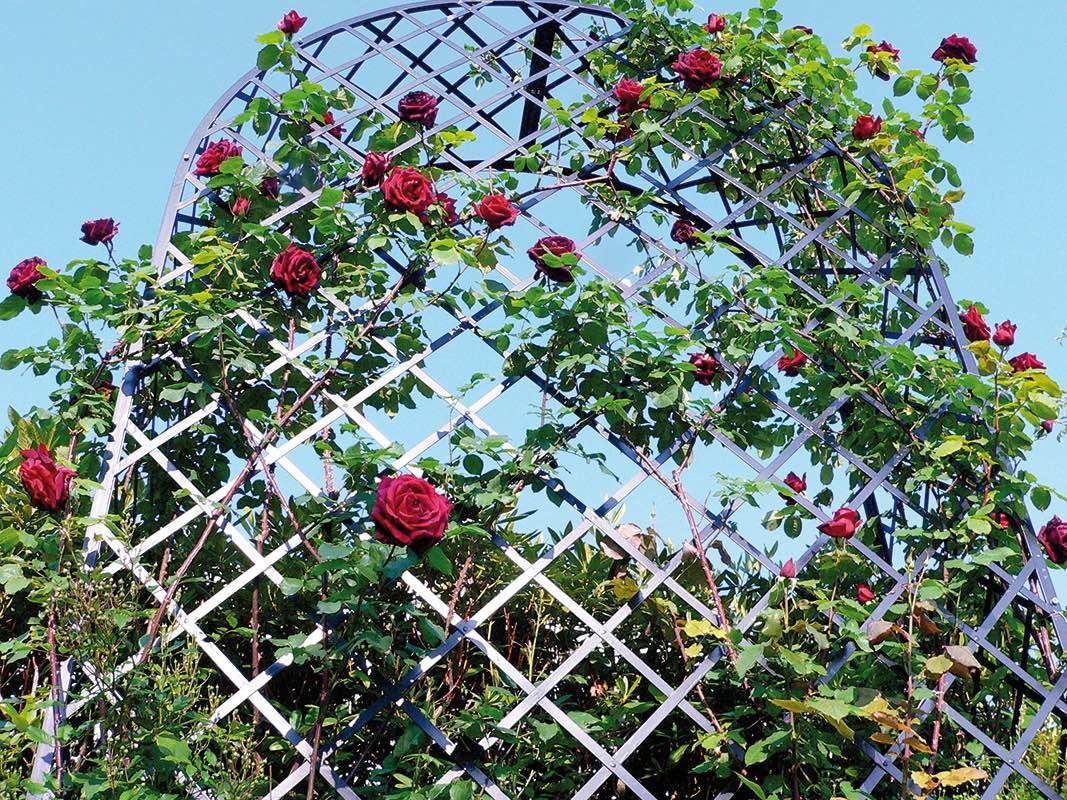 Romanische Rosenlaube Metall massiv von hinten mit roten Rosen