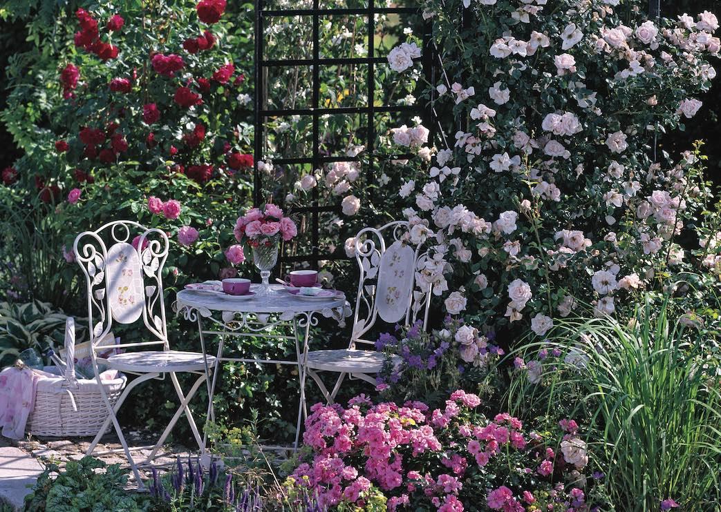 Rosenbogen mit verschiedenen Rosen und Stuhl