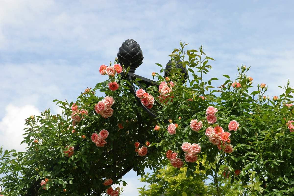 Viktorianischer Metall Rosenbogen mit Pinienzapfen