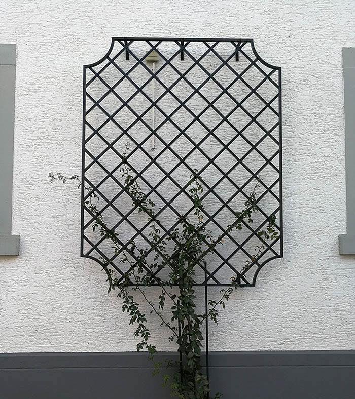 Wand-Rankgitter-Wollaton-mit-neu-gepflanzter-Kletterrose 1