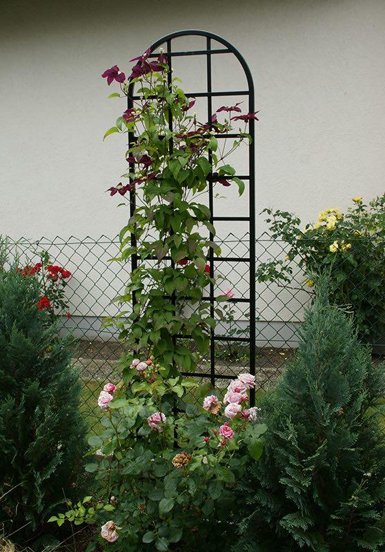 rankgitter-burlington-mit-clematis-und-rose