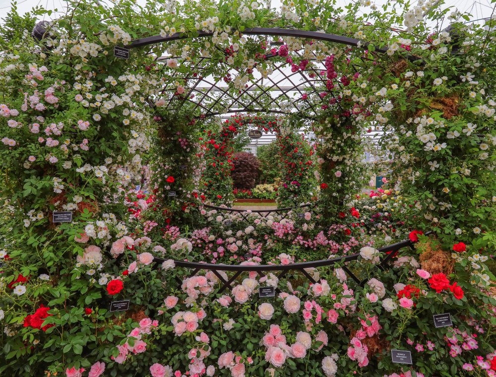 Hochzeits Pavillon Buscot Park bedeckt mit Rosen