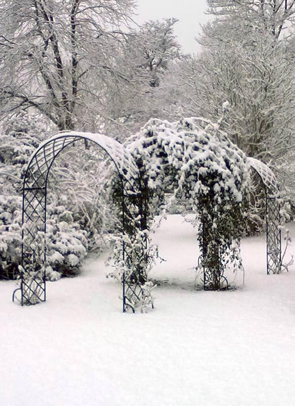 Drei Rosenbogen im Winter