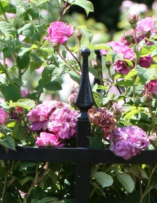 Gusseiserne Zierspitzen für Rosenstützen