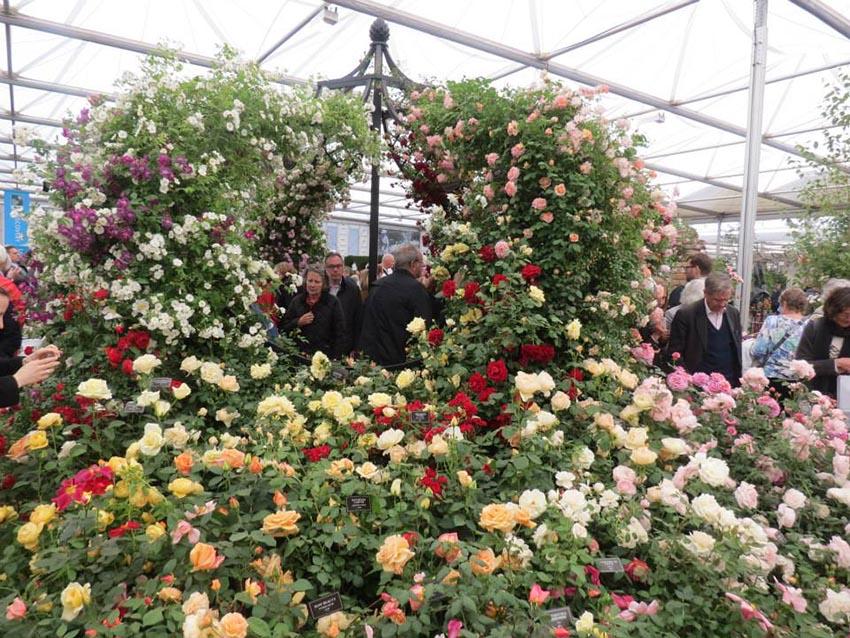 Herren Pavillon aus Metall in voller Rosenblüte