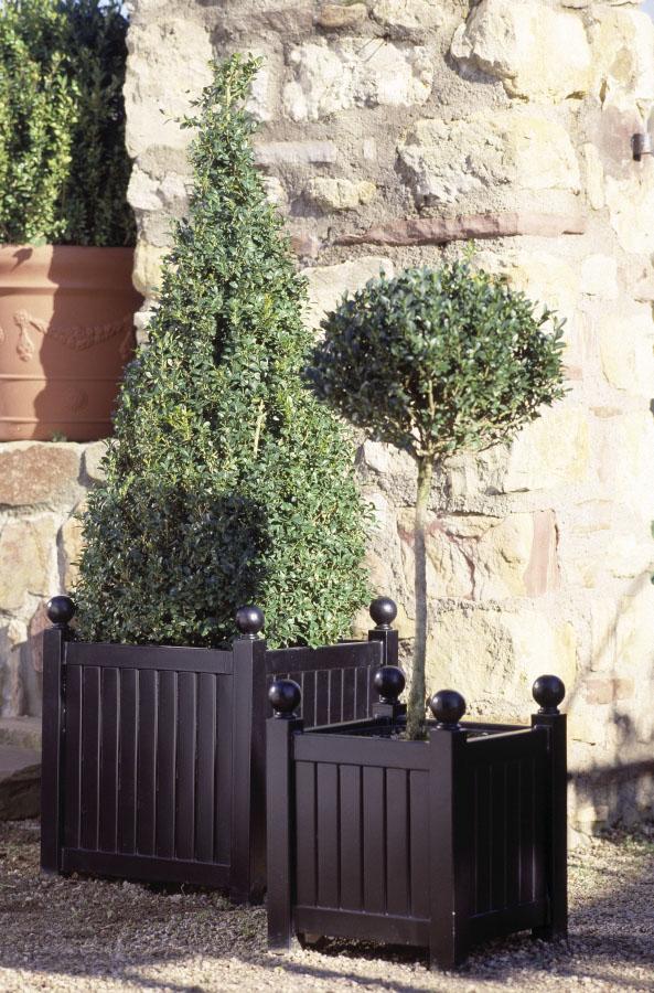 Kleiner Versailler Pflanzkübel mit Buchs Hochstämmchen