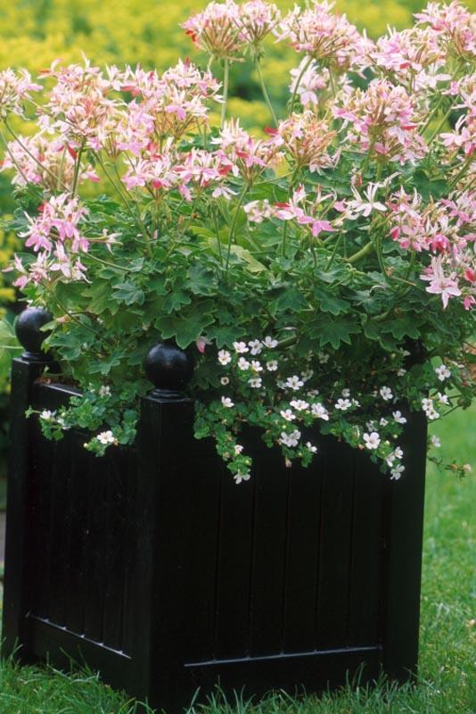 Kleines Versailler Kästchen mit Sommerblumen