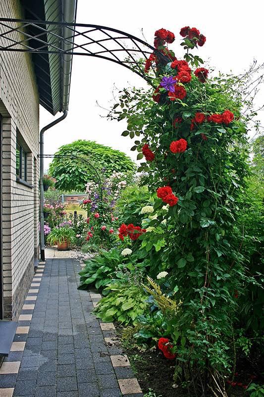 Rosenhalbbogen 260 x 120 cm