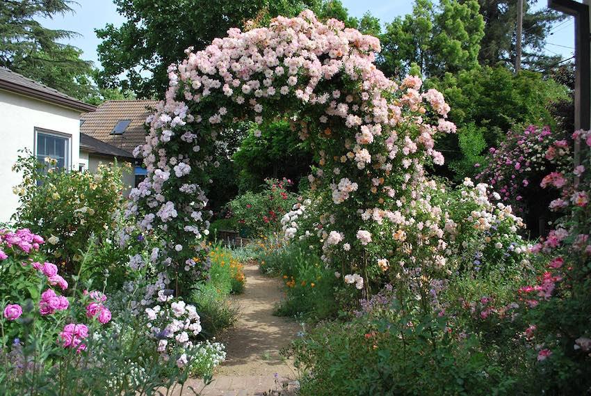 Rosenbogen Bagatelle mit üppiger Rosenbewachsung