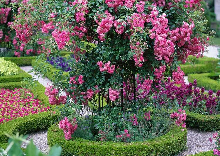 Rosenstütze-aus-Metall-im-Bux-Baum-Beet 1