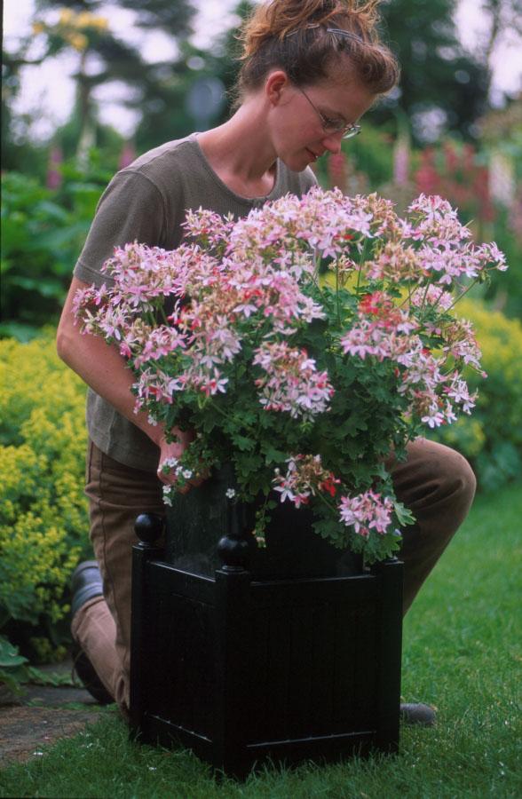 Versailler Pflanzkübel mit herausnehmbaren Innenkübel für einfachen Pflanzentausch