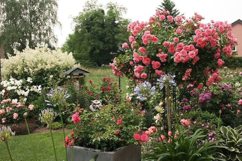 Rosenschirm aus Metall im Garten mit rosa Rosen