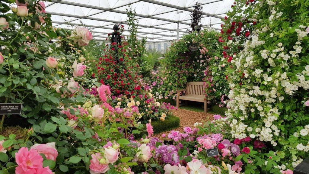 Flower Chelsea Flower Show 2019 Peter Beales Roses 2 Kopie