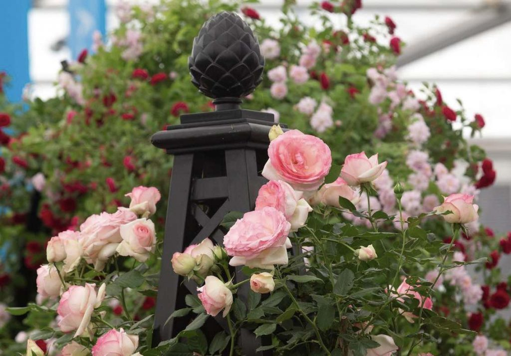 Flower Show 2019 Chelsea mit Rankgerüst Classic Garden